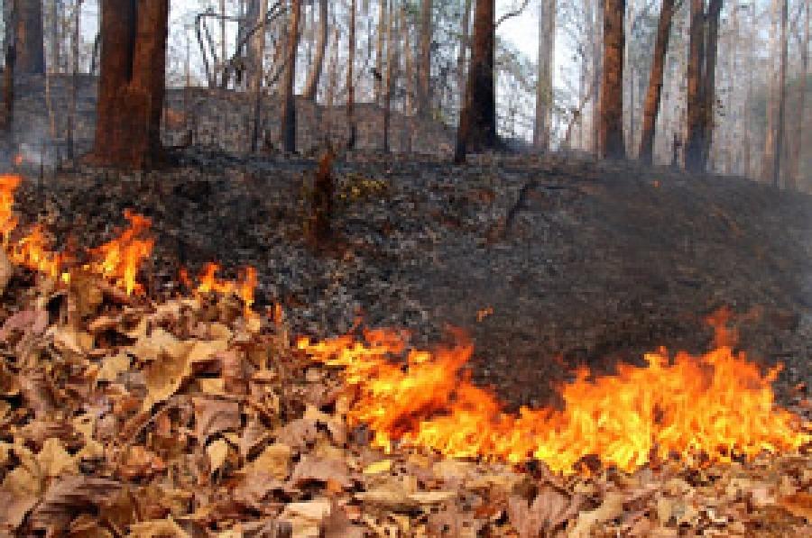 Incendi boschivi 2018